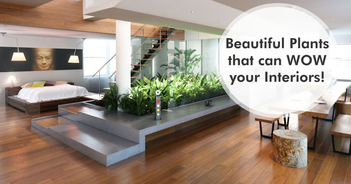 Perfect Greenery For Your Home