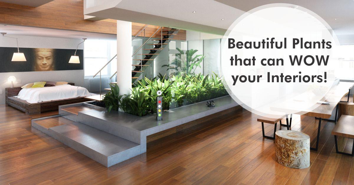 dreamzone fashion interior graphic design web development