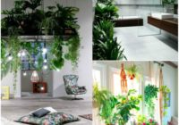 Plants for a peaceful interior.